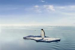 Pinguïn bedreigt door klimaatverandering