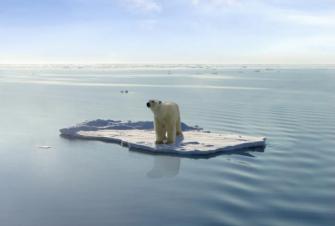 ijsbeer op schots door opwarming