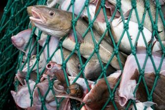 vissen in net